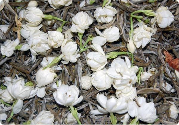 the blanc jasmin