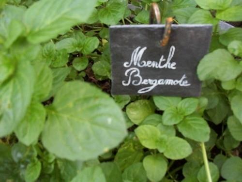 the menthe bergamote