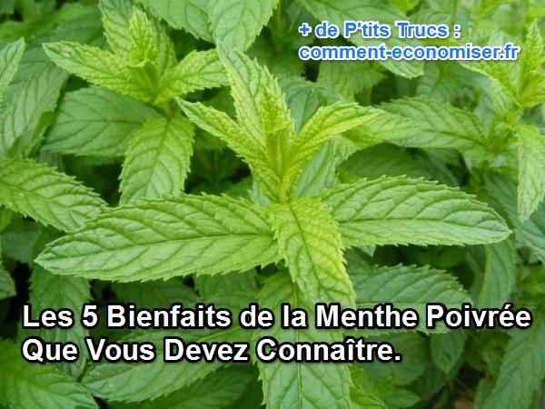 the menthe bienfaits