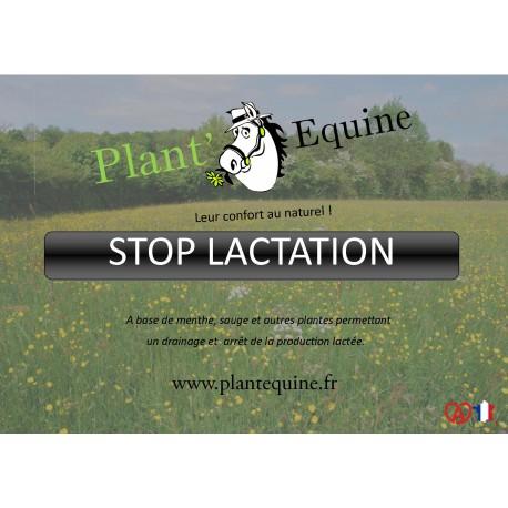the menthe lactation