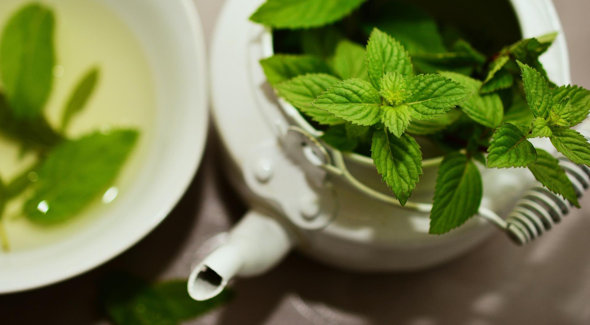 the vert elimine toxines