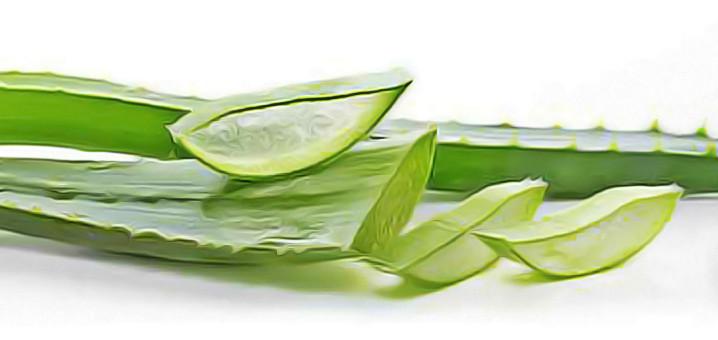 the vert fibrome