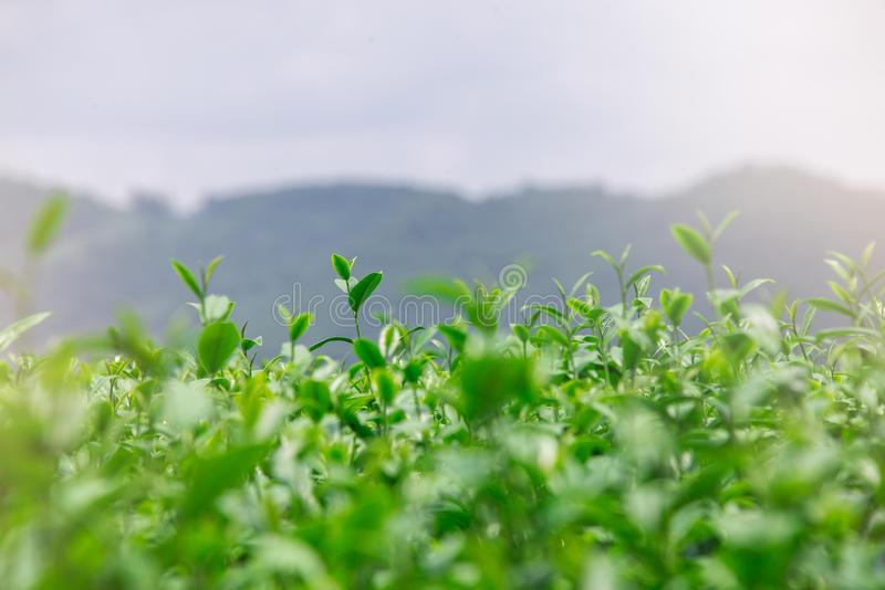 the vert frais