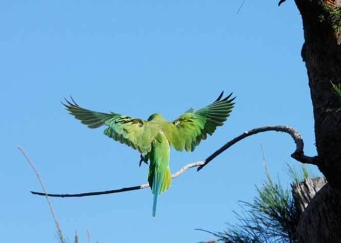 the vert ile maurice