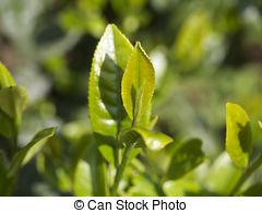 the vert jeune