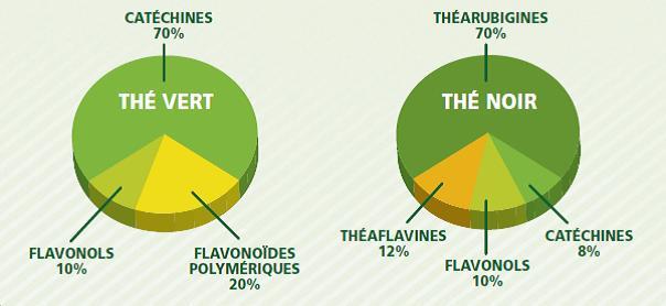 the vert nutrition