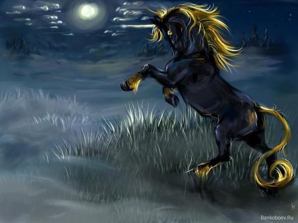 the noir licorne