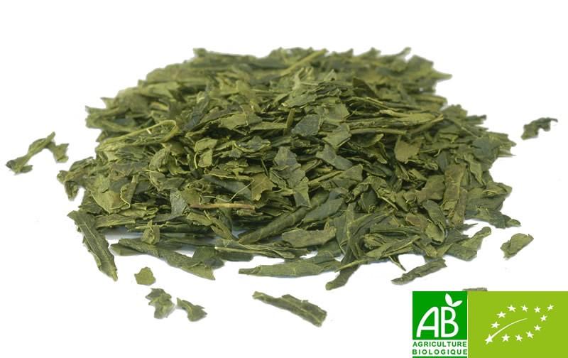 the vert bancha bio