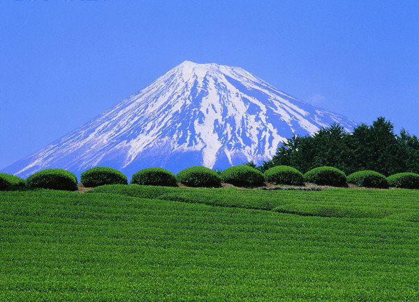 the vert fujiyama